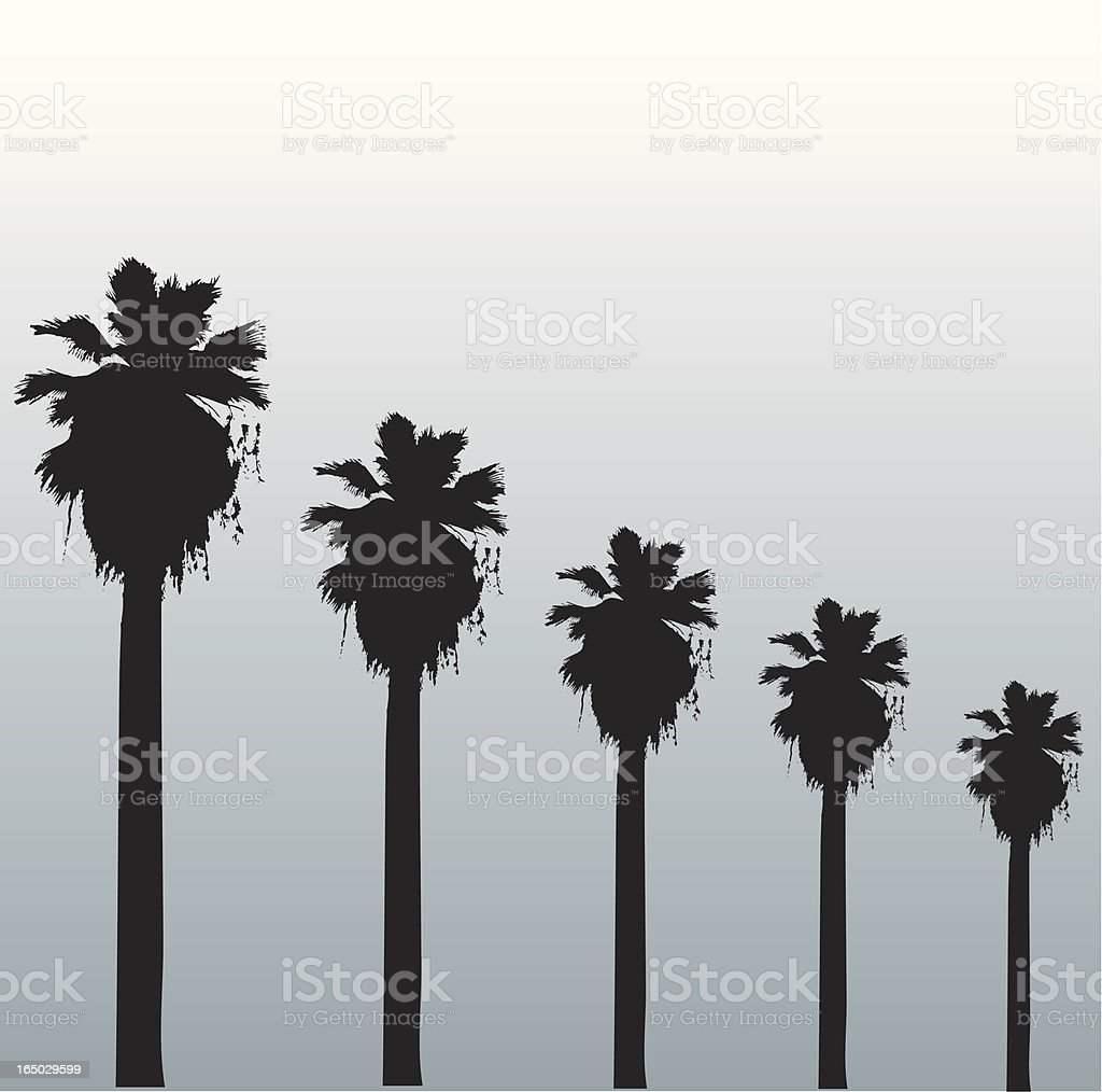 Hollywood palms vector art illustration