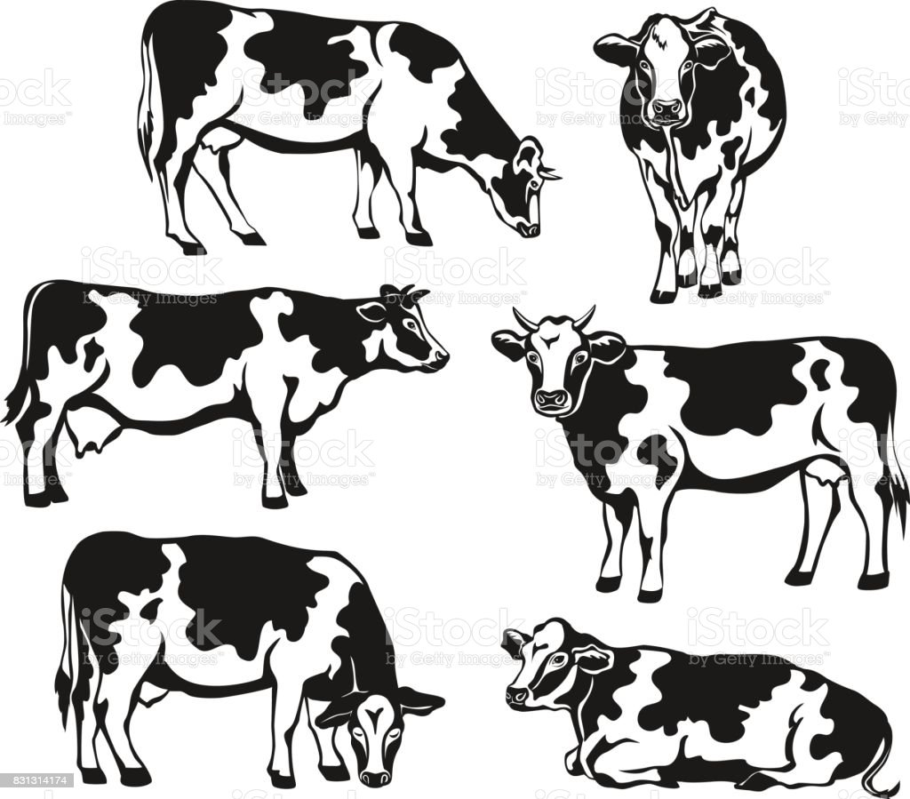 Holstein cattle silhouette set. Cows front, side view, walking, lying, grazing, eating, standing vector art illustration