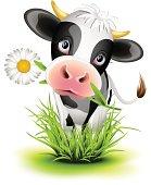 Holstein cow in grass