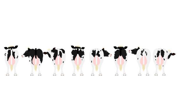 ホルシュタイン・フリージアン牛を列の後方に見る ベクターアートイラスト