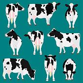 Holstein Friesian cattle various pose set