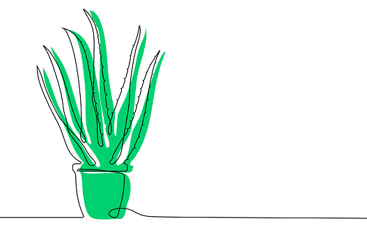 Home aloe in flower pot in one continuous line. Houseplants, succulents of Mexican desert. Vector