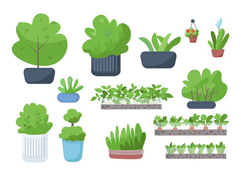 Home and street greenery flat color vector objects set. Houseplants, blooming flowers in pots, vegetables in garden, bushes in flowerbeds 2D isolated cartoon illustrations on white background