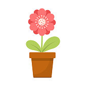 Beautiful vector design illustration of home flower in pot isolated on white background