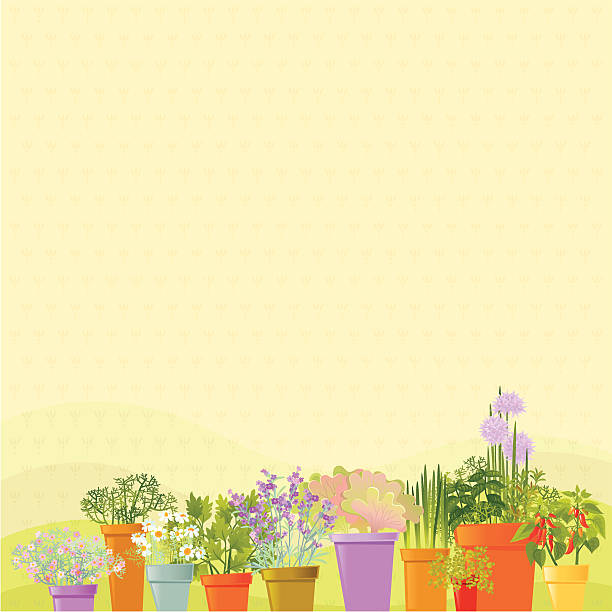 Home Garden Background Home Garden Background. Summer time. Vector. EPS 8. lavender plant stock illustrations