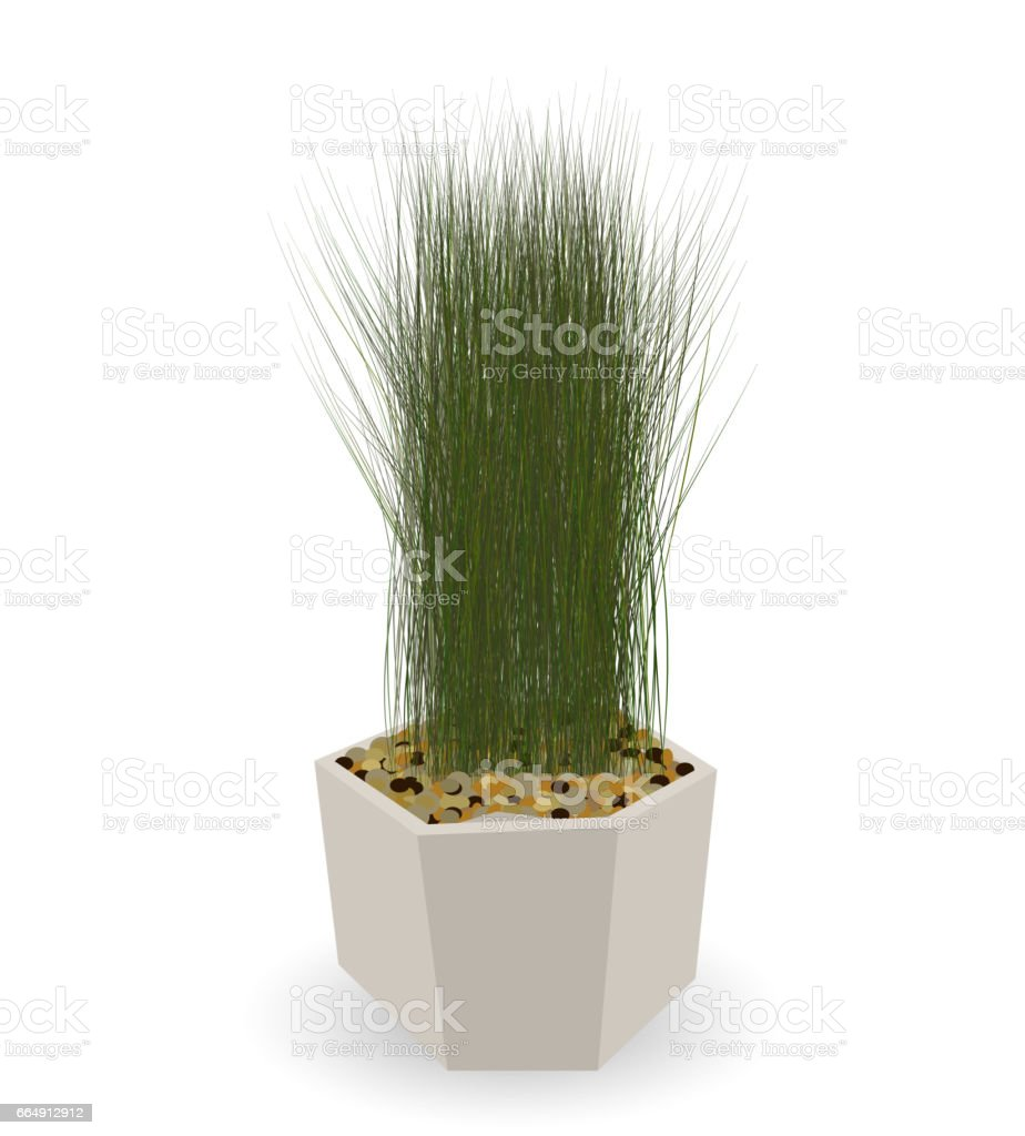 Home Green Plant in Nice Pot. Vector Illustration home green plant in nice pot vector illustration - immagini vettoriali stock e altre immagini di albero royalty-free