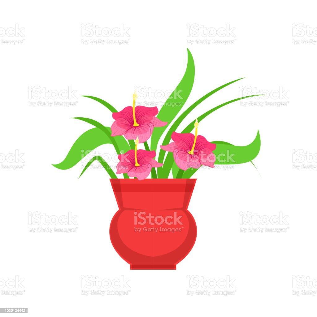 Home Hibiscus Flower In The Flowerpot Flower Shop Decorative Plants