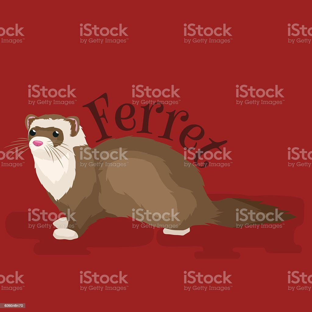 Home Pet, isolated ferret - Illustration vectorielle