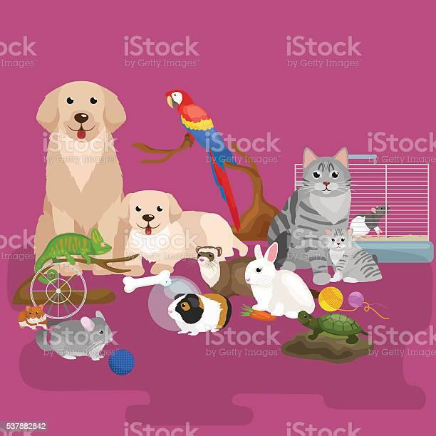 Home pets set cat dog parrot goldfish hamster domesticated animals vector id537882842?b=1&k=6&m=537882842&s=612x612&h=hxbhkbrkbtktc 92 b392dzqhevzsgty2awdusdvux0=