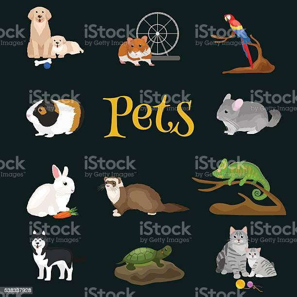 Home pets set cat dog parrot goldfish hamster domesticated animals vector id538337928?b=1&k=6&m=538337928&s=612x612&h=vtw2wypo1s ud8b4fcyizoccgjh9 ahr8wjhisiqeoq=