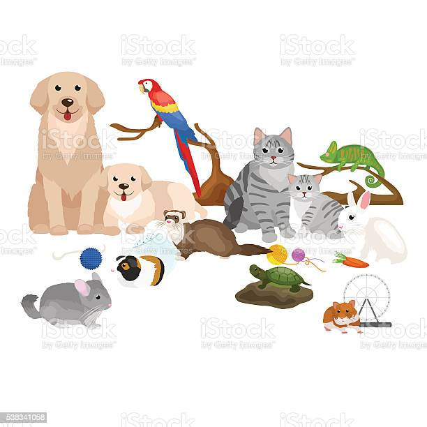 Home pets set cat dog parrot goldfish hamster domesticated animals vector id538341058?b=1&k=6&m=538341058&s=612x612&h=zj0inlwzqs7jayeogggrnwn2iyqmbvmrkmiav2xljy0=