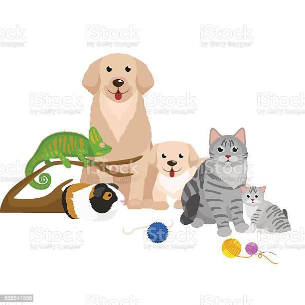 Home pets set cat dog parrot goldfish hamster domesticated animals vector id538341538?b=1&k=6&m=538341538&s=612x612&h=hmbww17gmwhsx492 rfkgxqmodeqajbgmzv oelbgia=