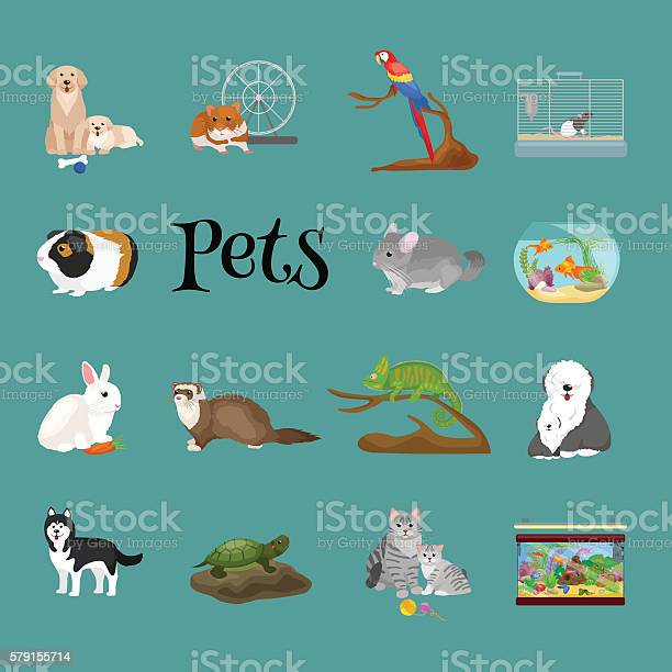 Home pets set cat dog parrot goldfish hamster domesticated animals vector id579155714?b=1&k=6&m=579155714&s=612x612&h=whh7kt2kcvsgd4wf9d7ezcd 8 nocxolyqppava pxk=