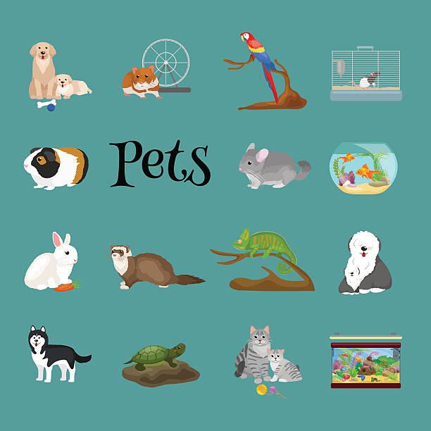 haus haustiere set, katze hund papagei goldfisch hamster, haustiere tiere - hamsterhaus stock-grafiken, -clipart, -cartoons und -symbole