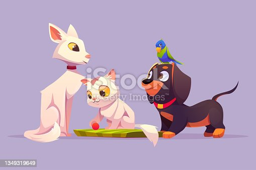 istock Home pets white cat, cute kitten parrot and dog 1349319649