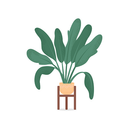 Home plant flat color vector object