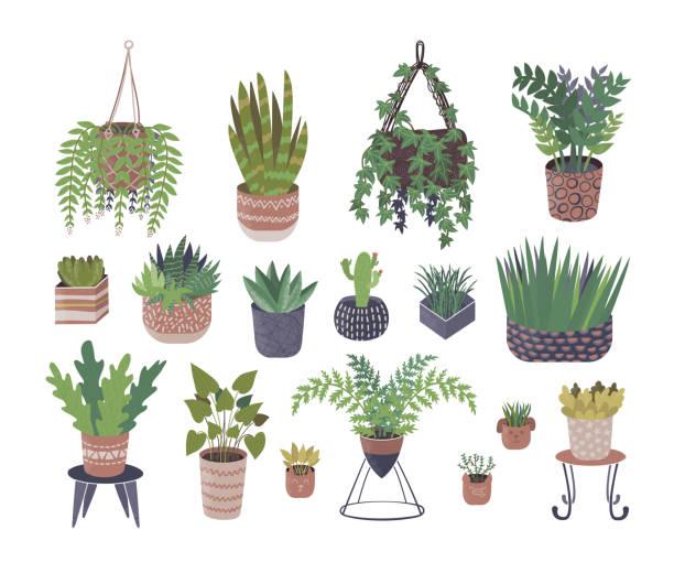 Home plants in flower pots vector illustration isolated set coll vector art illustration