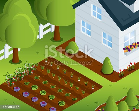 Isometric vegetable garden with house. All colors are global. All objects contain a clipping mask. File Type - EPS 10.