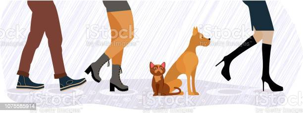 Homeless cat and dog between men and women feet vector id1075585914?b=1&k=6&m=1075585914&s=612x612&h=j1q 3ynnrqb6 el5bwjncl6nj5btkq9bubmzgcuypfu=