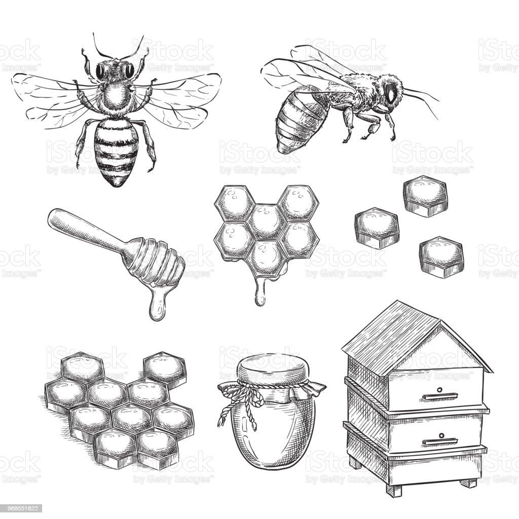 Ilustración de Vector Ilustración Bosquejo Miel Y Abeja Panales Pote ...