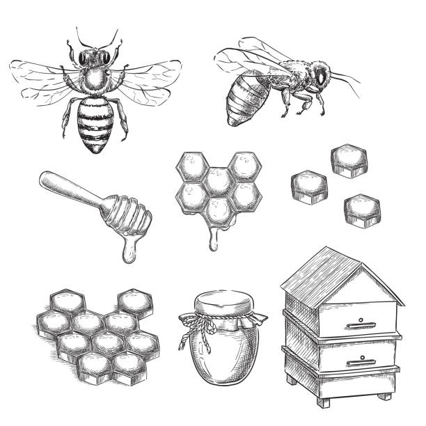 illustrazioni stock, clip art, cartoni animati e icone di tendenza di honey and bee sketch vector illustration. honeycombs, pot and hive hand drawn isolated design elements - miele dolci