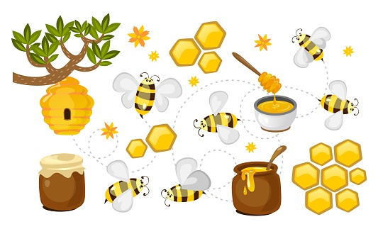 Honey and bee vector collection. honeycombs, jars with honey and bees colorful set. Vector beekeeping illustration