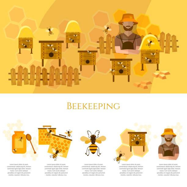 Honey and beekeeping infographics beekeeper on apiary Honey and beekeeping infographics beekeeper on apiary vector beekeeper stock illustrations
