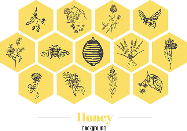 Honey background Set of vector vintage template label with hand draw flowers and herbs. Layout, mockup design for honey, cosmetics shop, beauty salon, natural and organic products. Organic plants sketch background. beekeeper stock illustrations