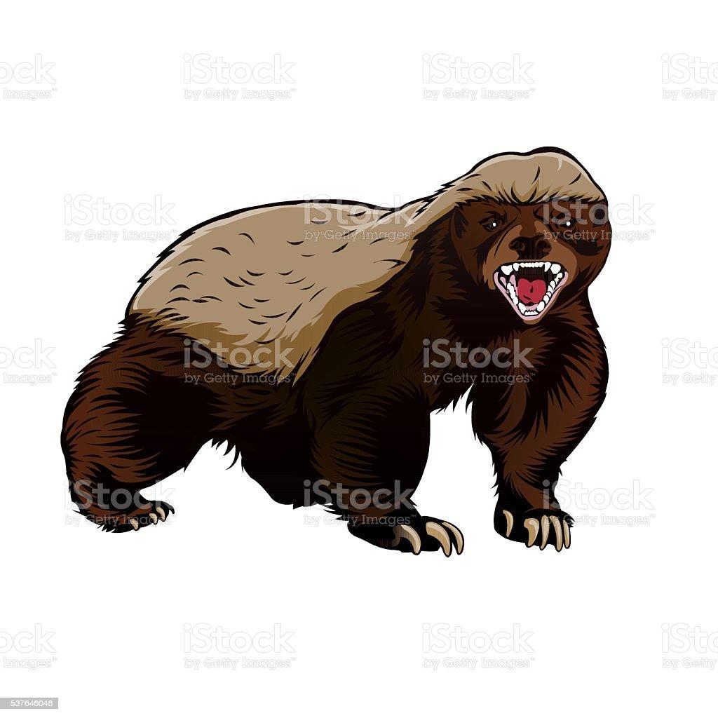 Honey Badger Illustration Color Vector Stock Illustration
