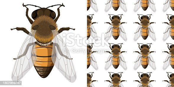 istock Honey bee and seemless background 1302959747