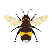 Honey Bee icon isolated on white background. Vector illustration flat design