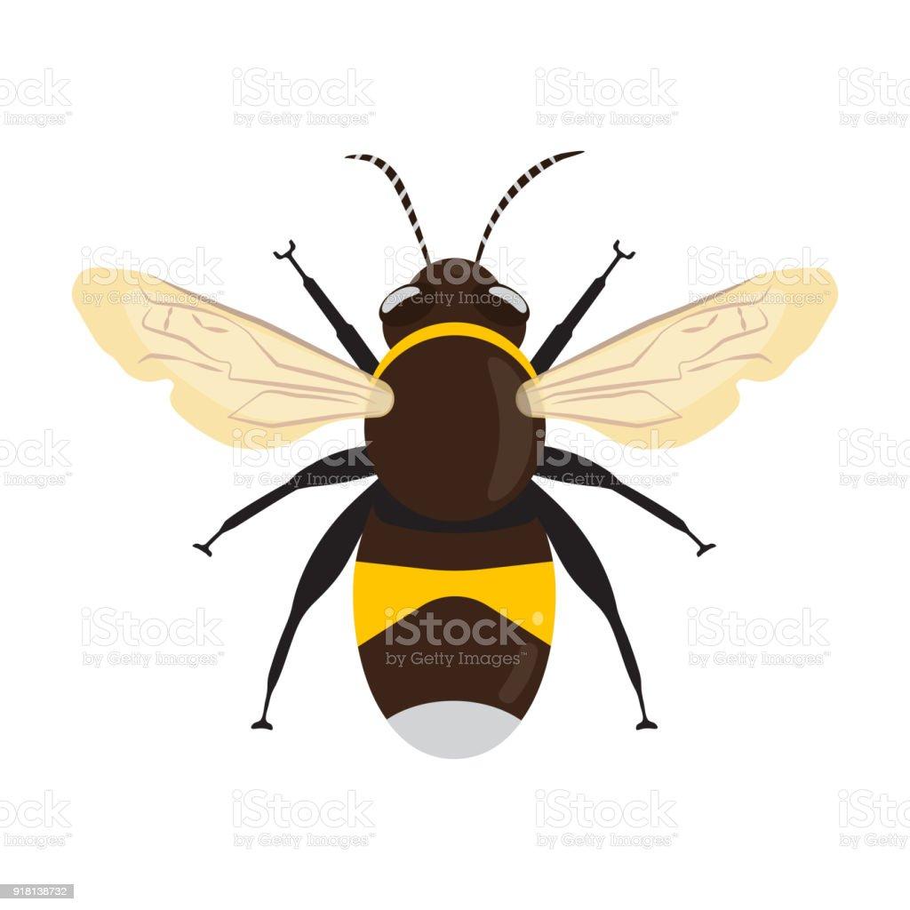 Honey Bee Icon vector art illustration