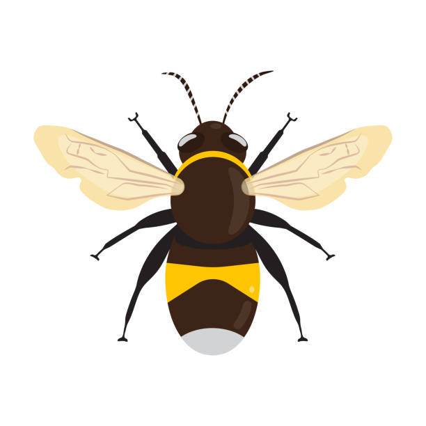 Honey Bee Icon Honey Bee icon isolated on white background. Vector illustration flat design bee clipart stock illustrations