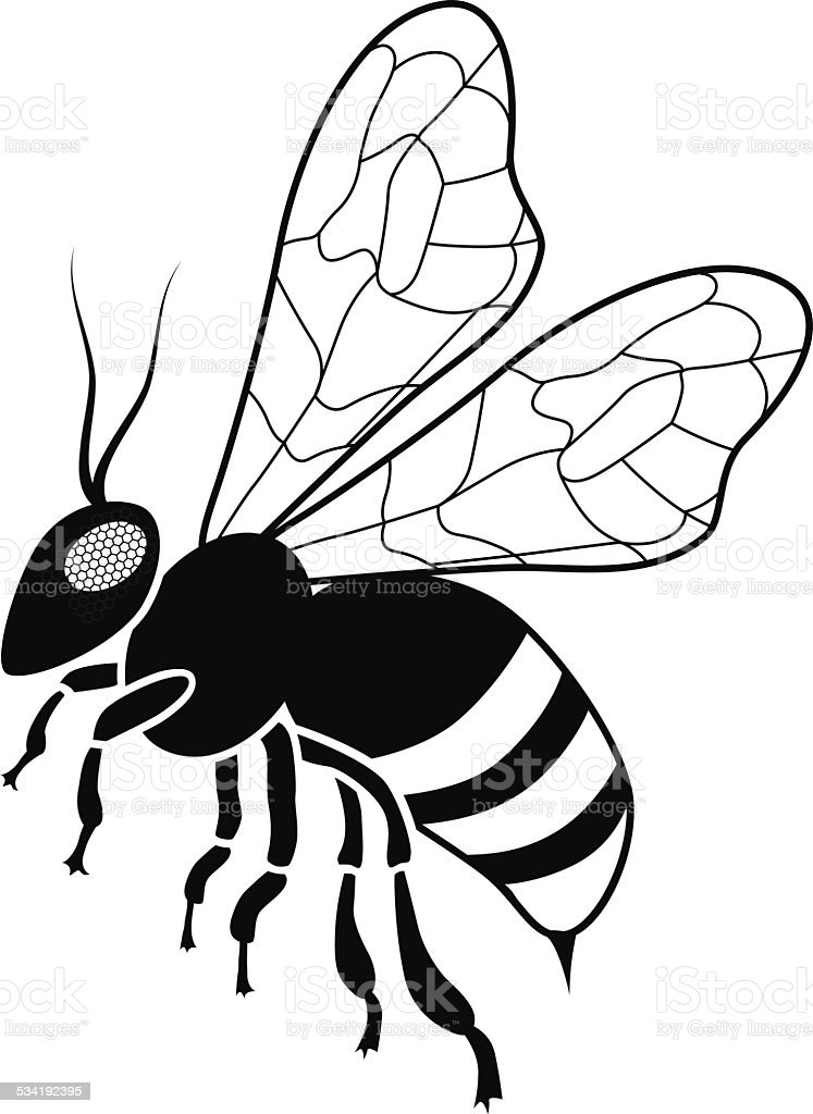 Honey Bee In Black And White Side View Stock Vector Art & More ...