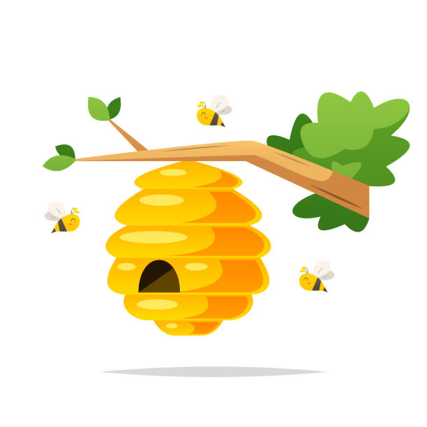 Honey bee nest vector isolated illustration Vector element beehive stock illustrations