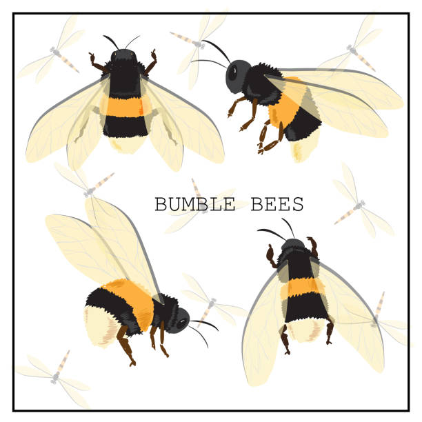 stockillustraties, clipart, cartoons en iconen met honey bee set. vector. set van honing en bijen - kaal geschoren hoofd
