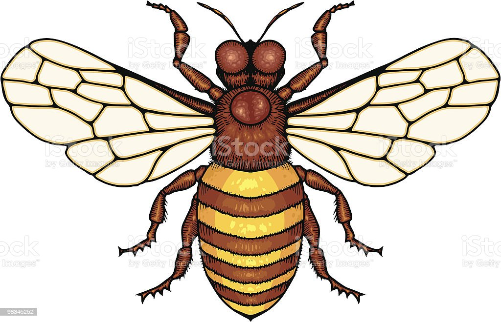 Honey bee royalty-free honey bee stock vector art & more images of animal body part