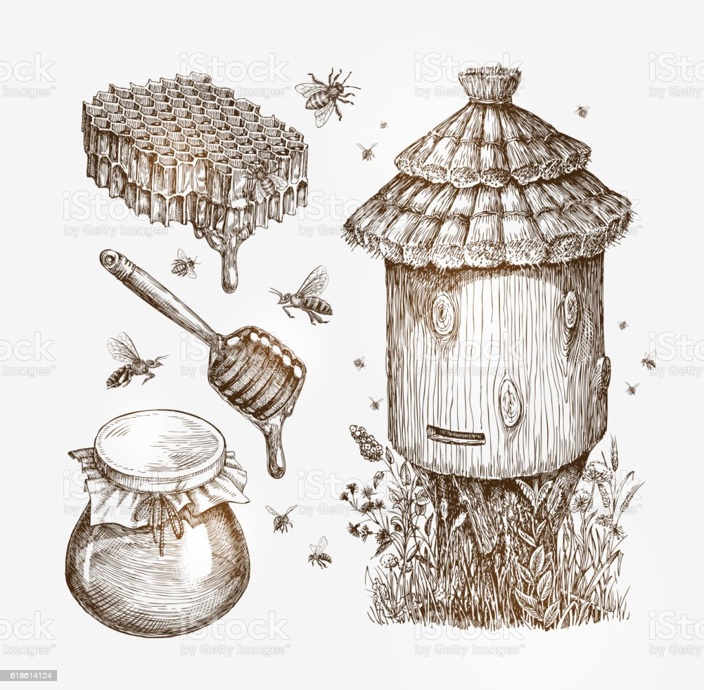 Honey, beekeeping, bees. Collection vintage sketch vector illustration vector art illustration