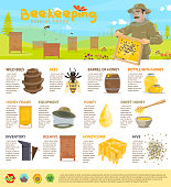 Beekeeping and honey production or apiary infographic poster template. Vector design of diagrams and icons for bees and honeycomb, statistics on beehives inventory and honey containers barrel and jars