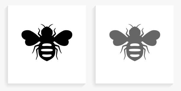 ilustrações de stock, clip art, desenhos animados e ícones de honey bees black and white square icon - inseto himenóptero