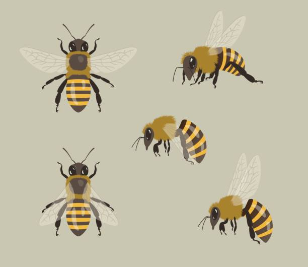 illustrazioni stock, clip art, cartoni animati e icone di tendenza di honey bees, different views - impollinazione