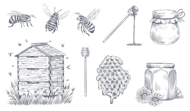 Honey bees engraving. Hand drawn beekeeping, vintage honey farm and honeyed bee pollen vector illustration set Honey bees engraving. Hand drawn beekeeping, vintage honey farm and honeyed bee pollen. Insect bee drawing, honeycomb and organic flower nectar jars. Vector illustration isolated icons set beehive stock illustrations