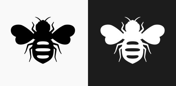 illustrazioni stock, clip art, cartoni animati e icone di tendenza di honey bees icon on black and white vector backgrounds - miele dolci