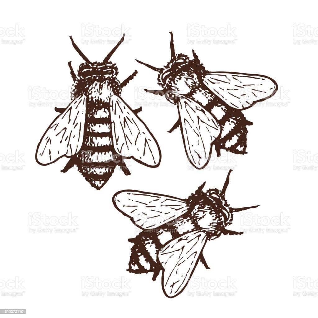 Honig Bienen Skizze Abbildung – Vektorgrafik