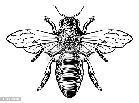istock Honey Bumble Bee Woodcut Vintage Bumblebee Drawing 1198055040