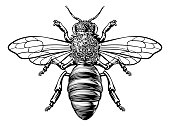 A honey bumble bee or bumblebee in a woodcut drawing vintage style