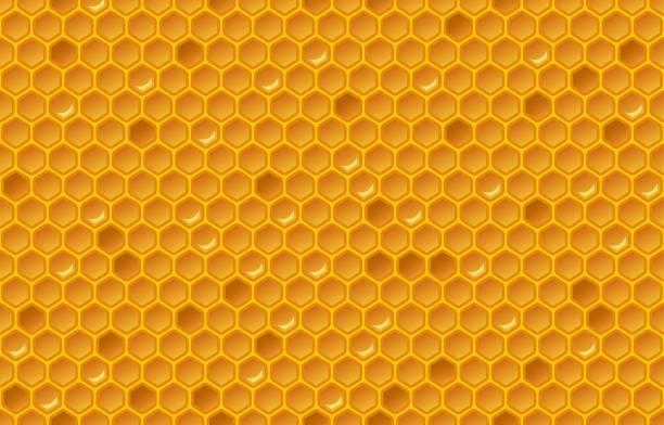ilustrações de stock, clip art, desenhos animados e ícones de honey comb pattern - inseto himenóptero