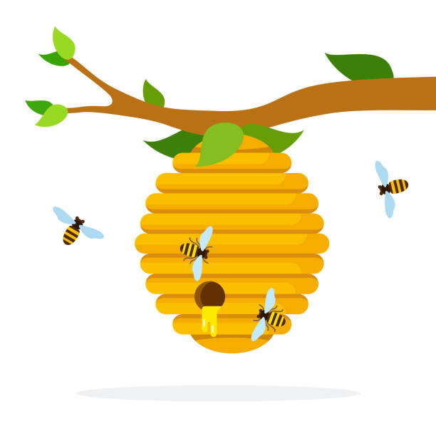 Honey hive with bees hanging on a branch flat isolated Honey hive with bees hanging on a branch vector flat material design isolated on white beehive stock illustrations