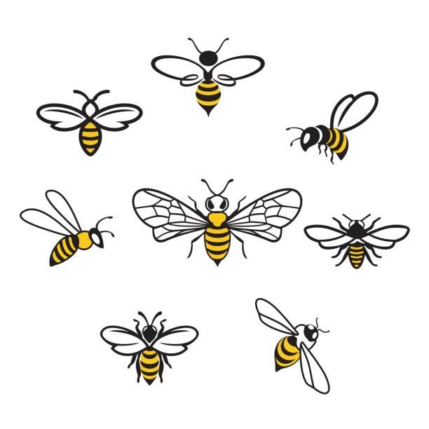 ilustrações, clipart, desenhos animados e ícones de icons3 de mel - bee