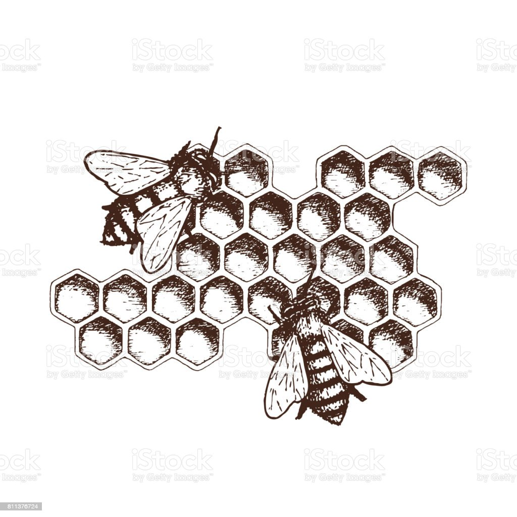 Honig-Tinte-Skizze-Abbildung – Vektorgrafik